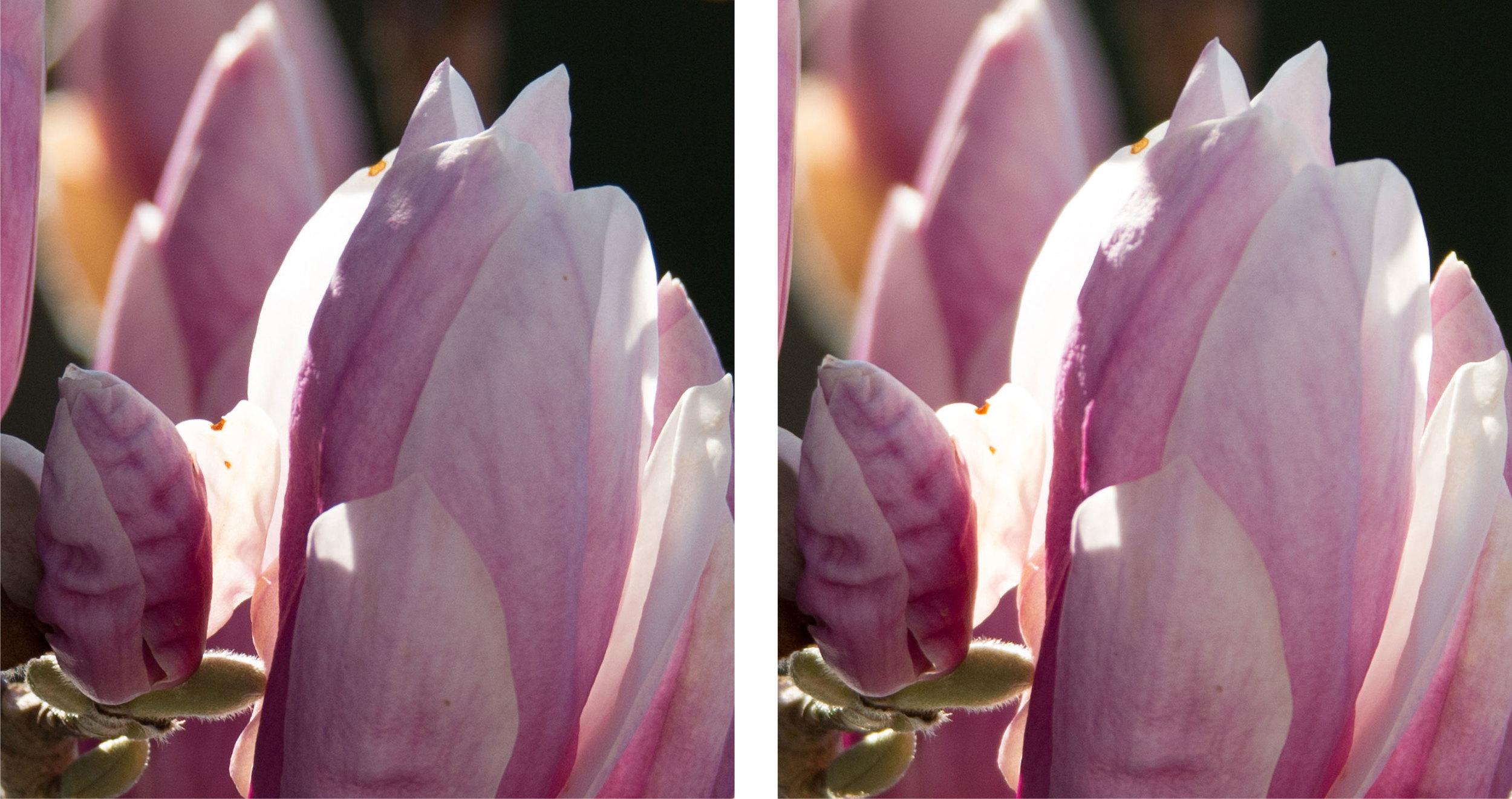 1:1 Ausschnitte bei 350 mm und voll offener Blende (was beim Sigma links 6.3 und beim Tamron rechts 5.6 ist) links Sigma Sports 150–600mm f5–6,3 DG OS HSM, rechts Tamron SP 150–600mm f5–6.3 VC USD (für vergrösserte Ansicht auf die Bilder klicken)