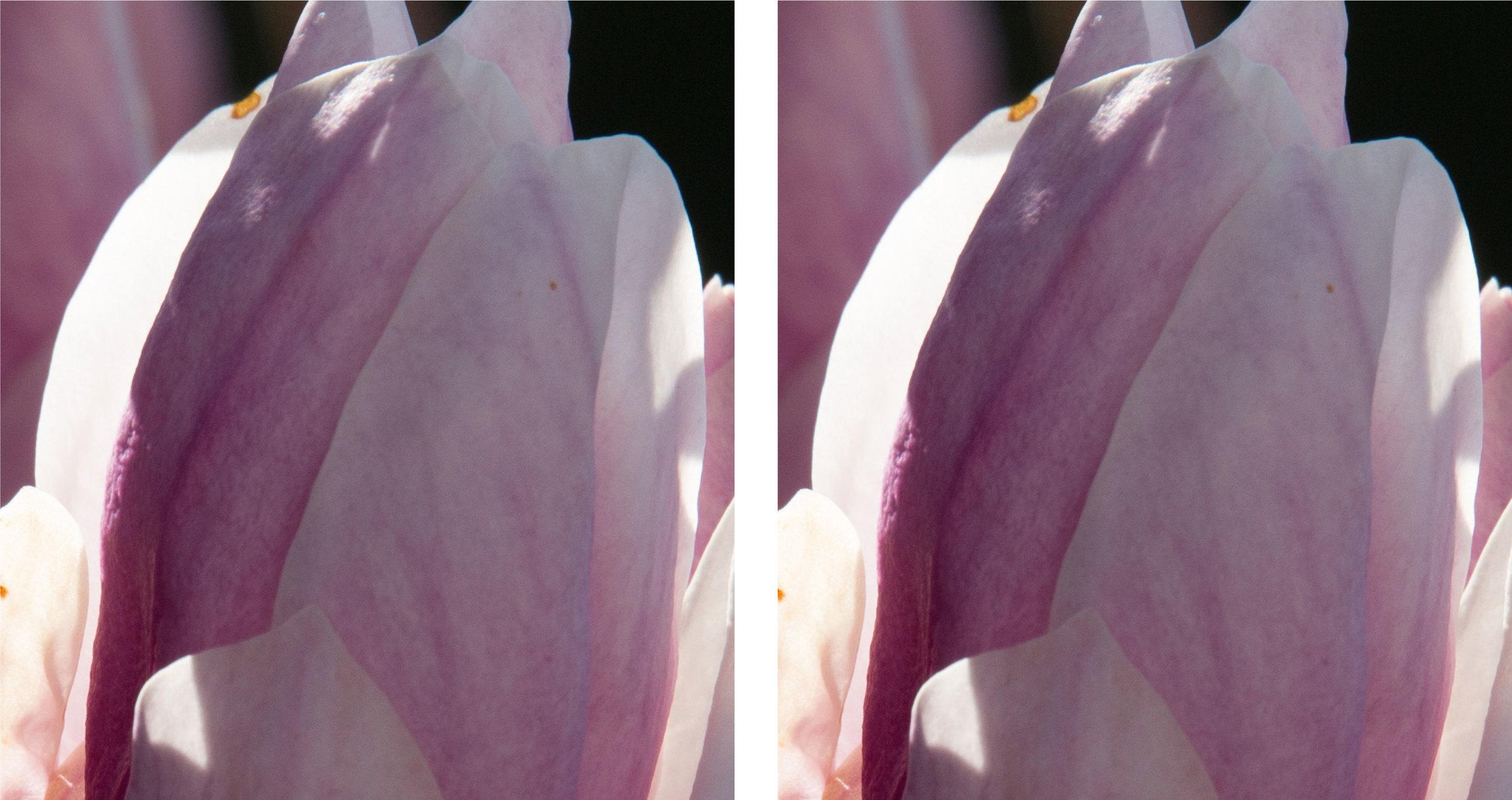 1:1 Ausschnitte bei 600 mm und Blende 11 links Sigma Sports 150–600mm f5–6,3 DG OS HSM, rechts Tamron SP 150–600mm f5–6.3 VC USD (für vergrösserte Ansicht auf die Bilder klicken)
