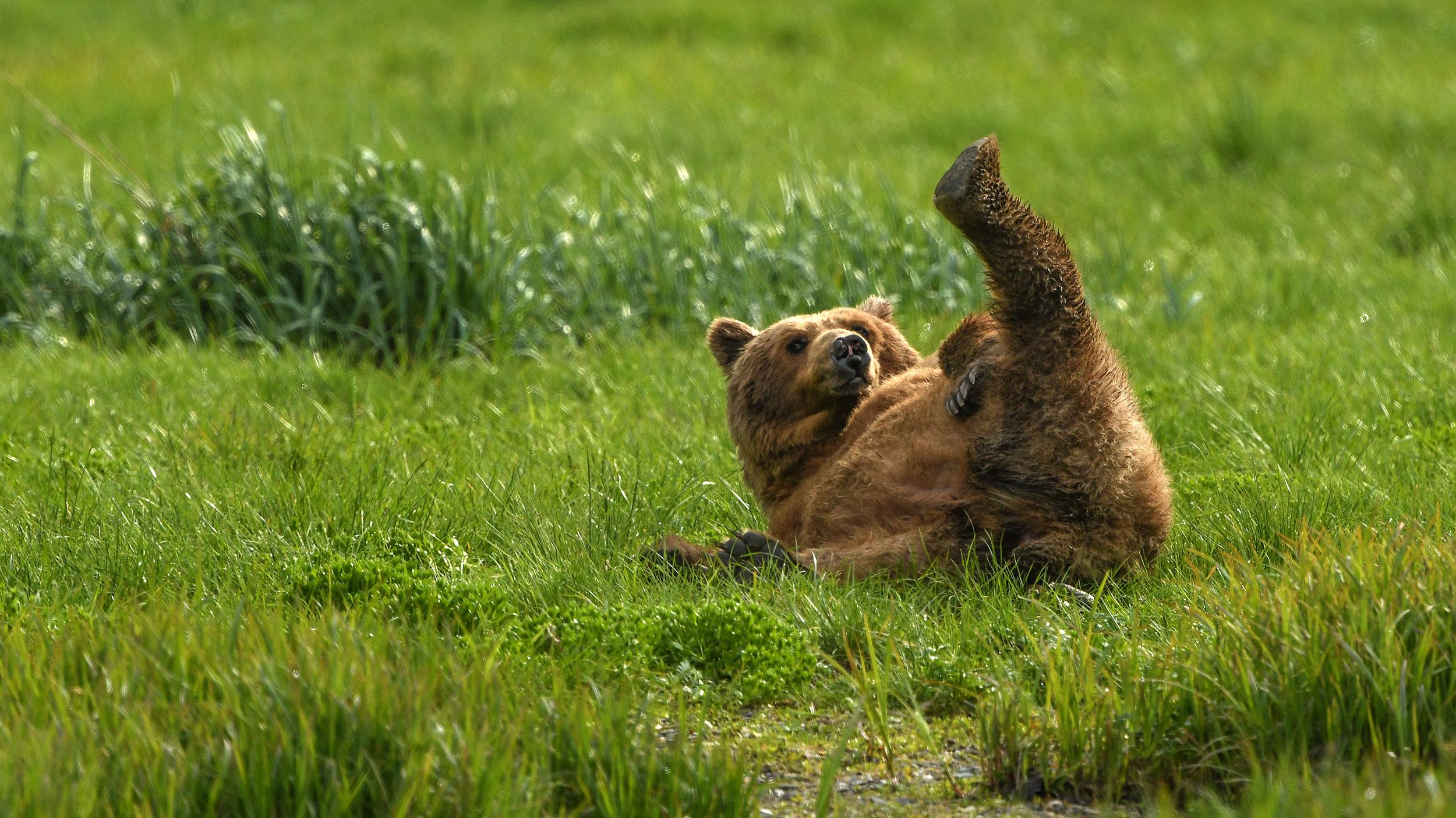 grizzly photo by peter schäublin fotograf Schaffhausen