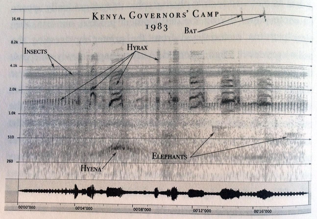A spectrogram of sounds at Masai Mara.