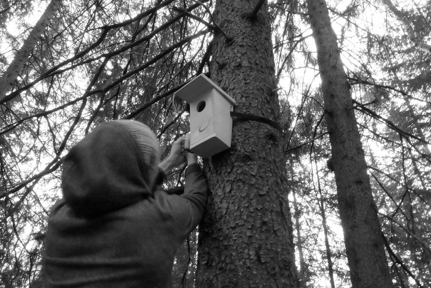 Nature Calling - setting up the birdhouse