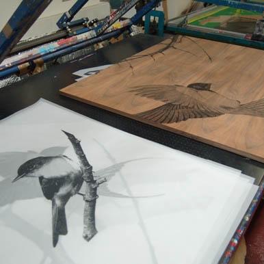 Image of Ben Allen Bird art for printing onto kitchen cabinets