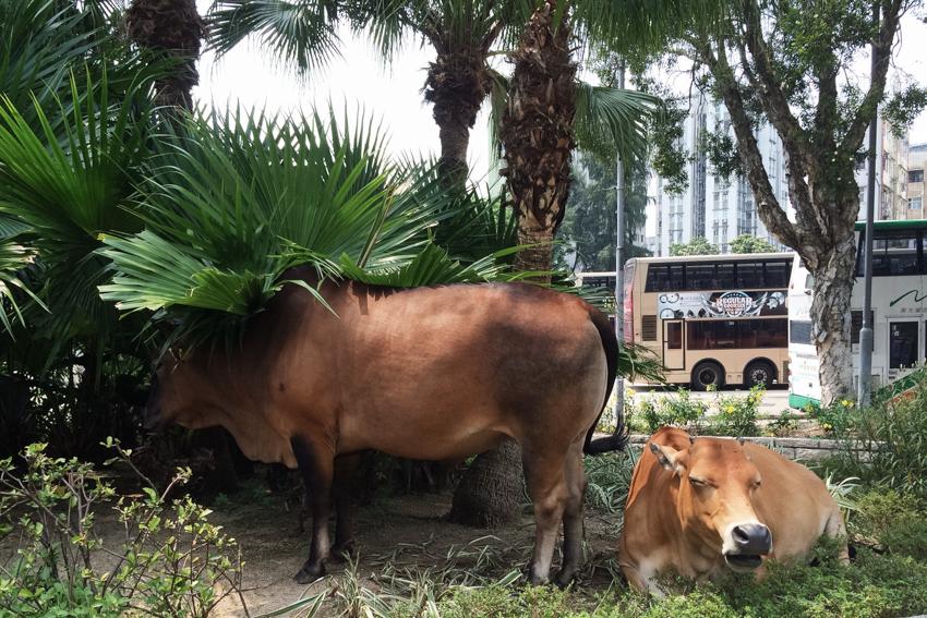 Blog_cow.jpg