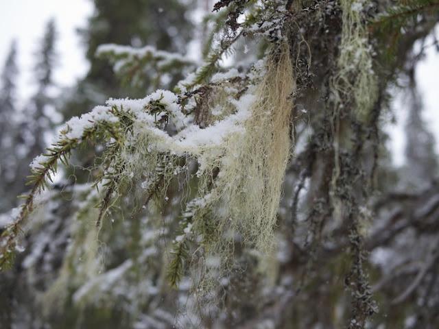 snow+56.jpg