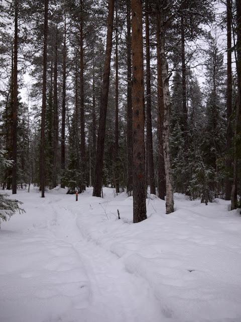snow+61.jpg