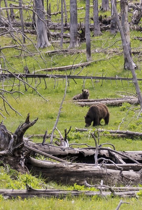 Run, children! Run towards the lovely cuddly bears, for we no longer love you.