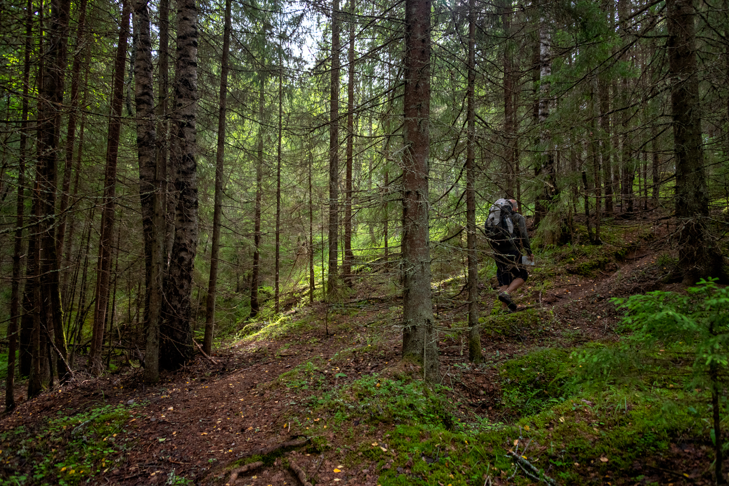 hiker in forest nuuksio.jpg