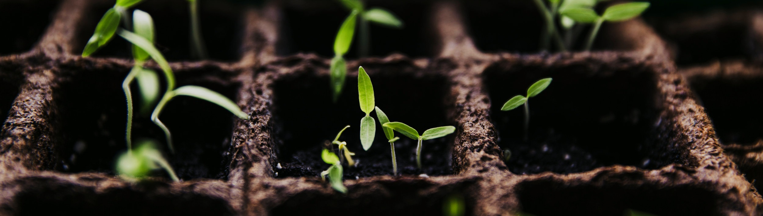 Growing at Grace - Here are some simple steps that are proven to lead people down a path of spiritual growth.