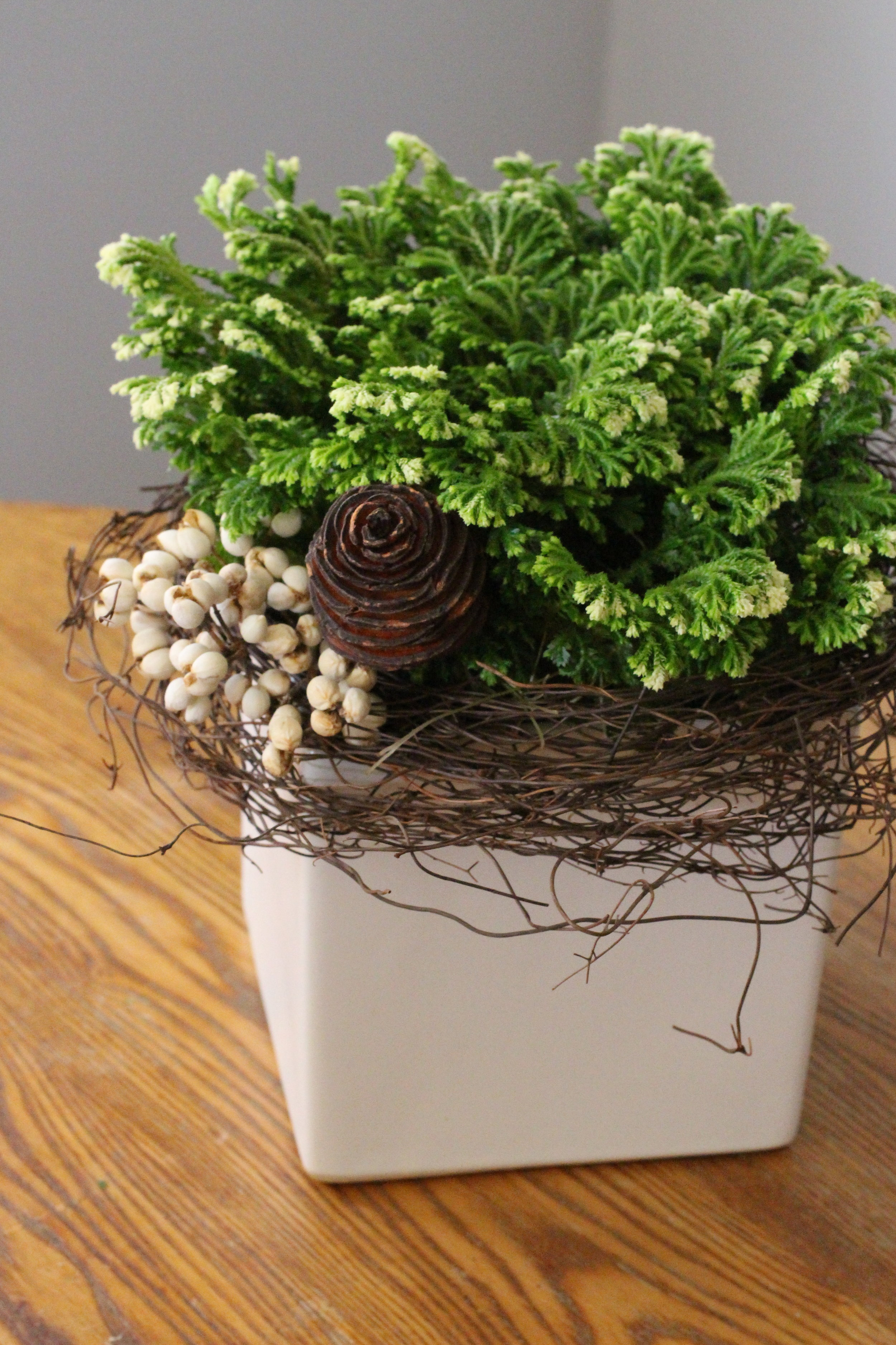 Frosty Fern ( Selaginella)  in white ceramic cube,  $35.