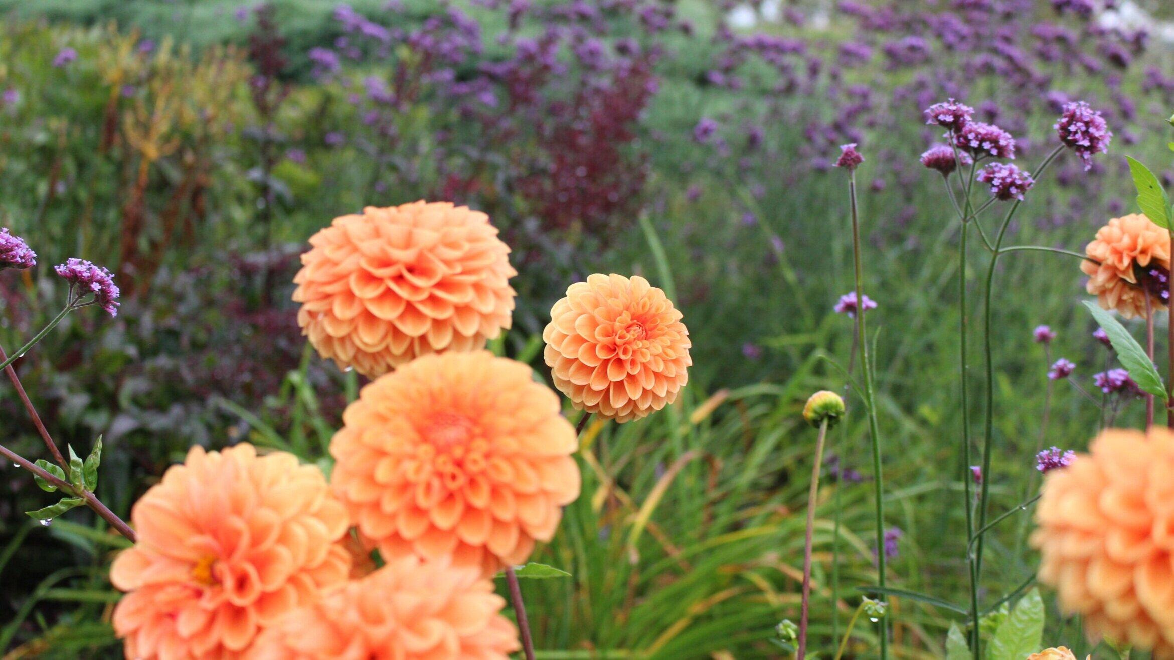garden+design+and+maintenance+form