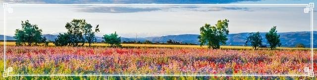wild-flowers-1389905_640
