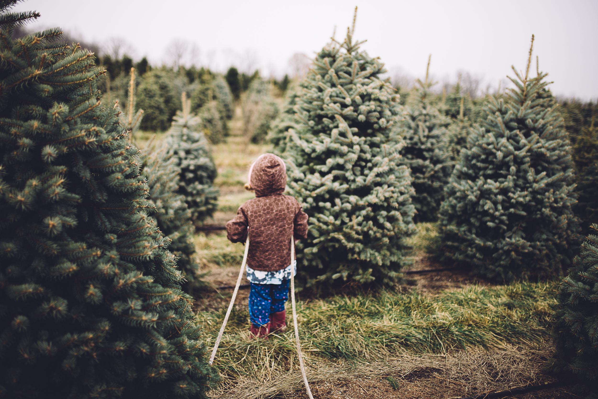 christmas-tree-cutting-3.jpg