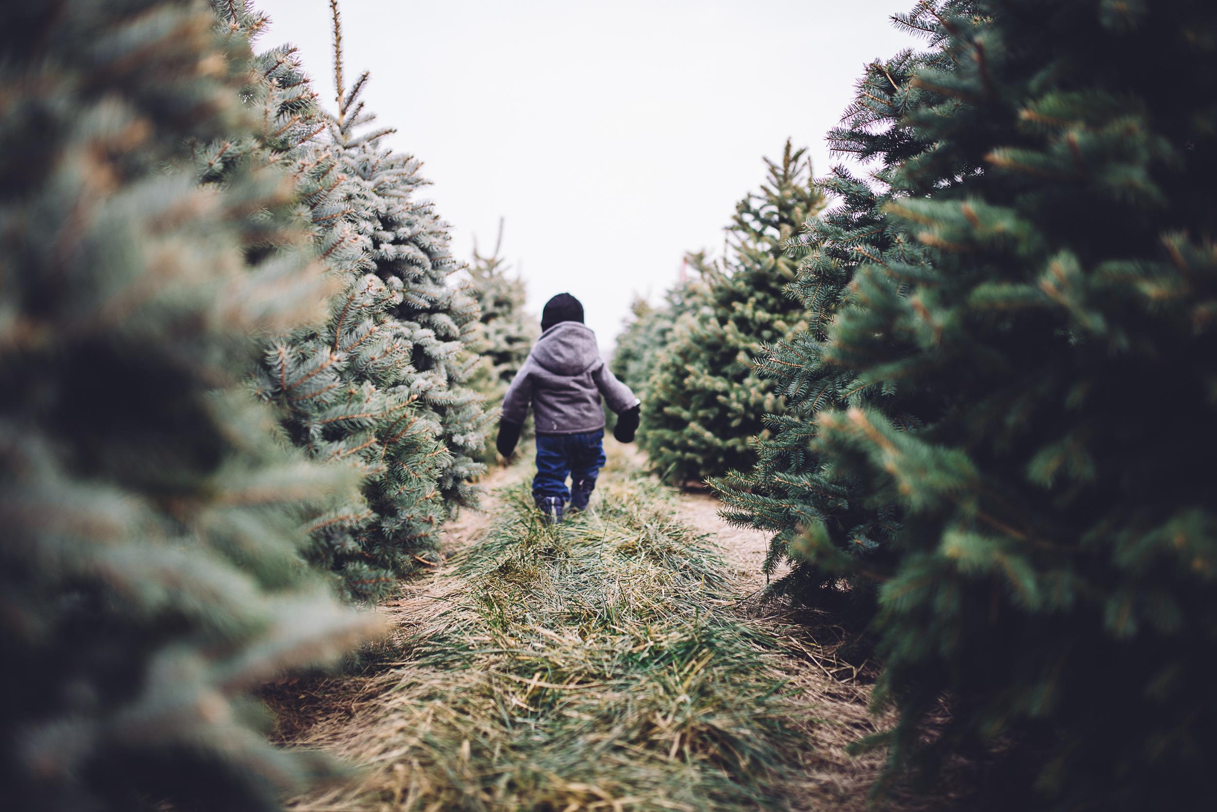 christmas-tree-cutting-4.jpg