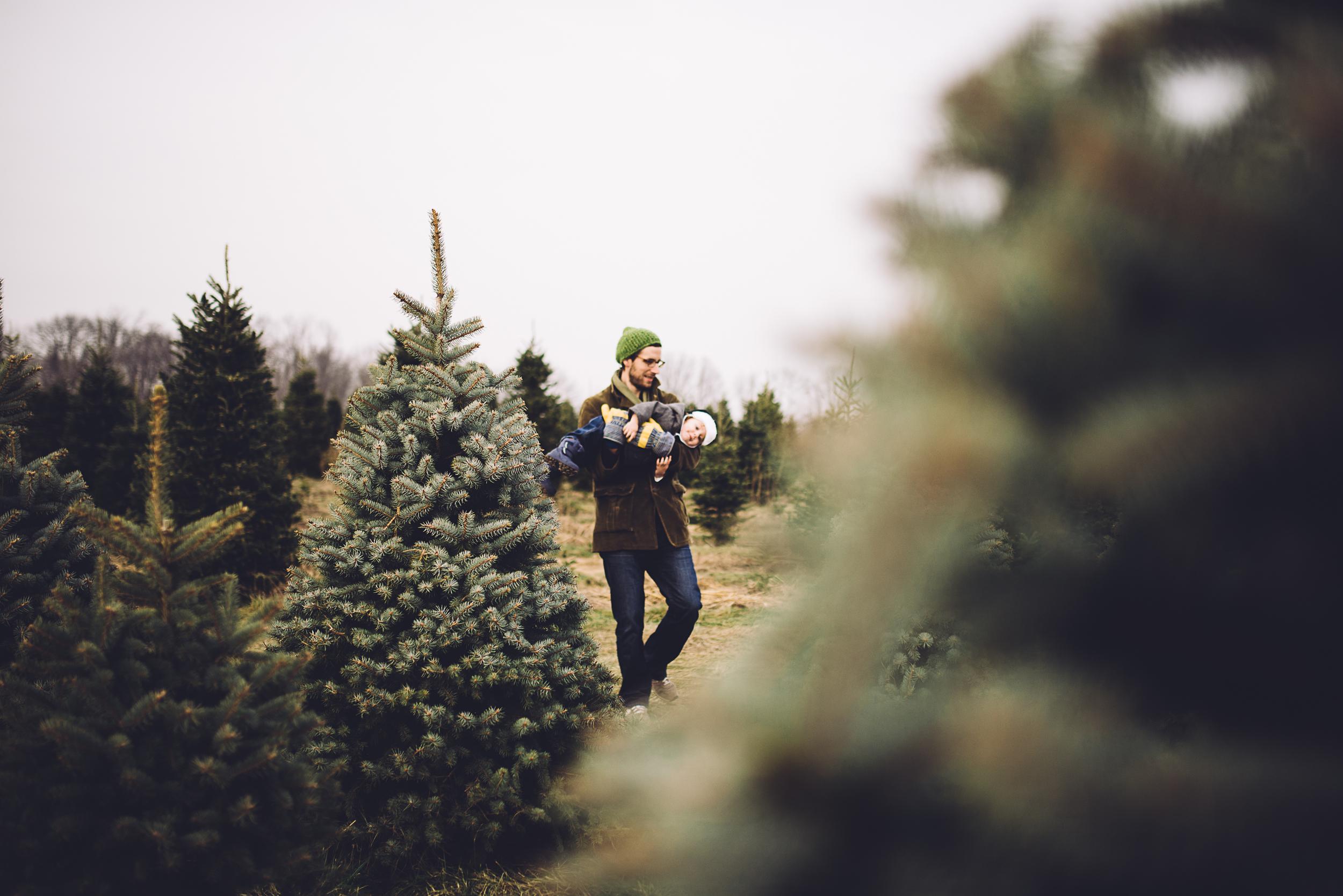 christmas-tree-cutting-6.jpg