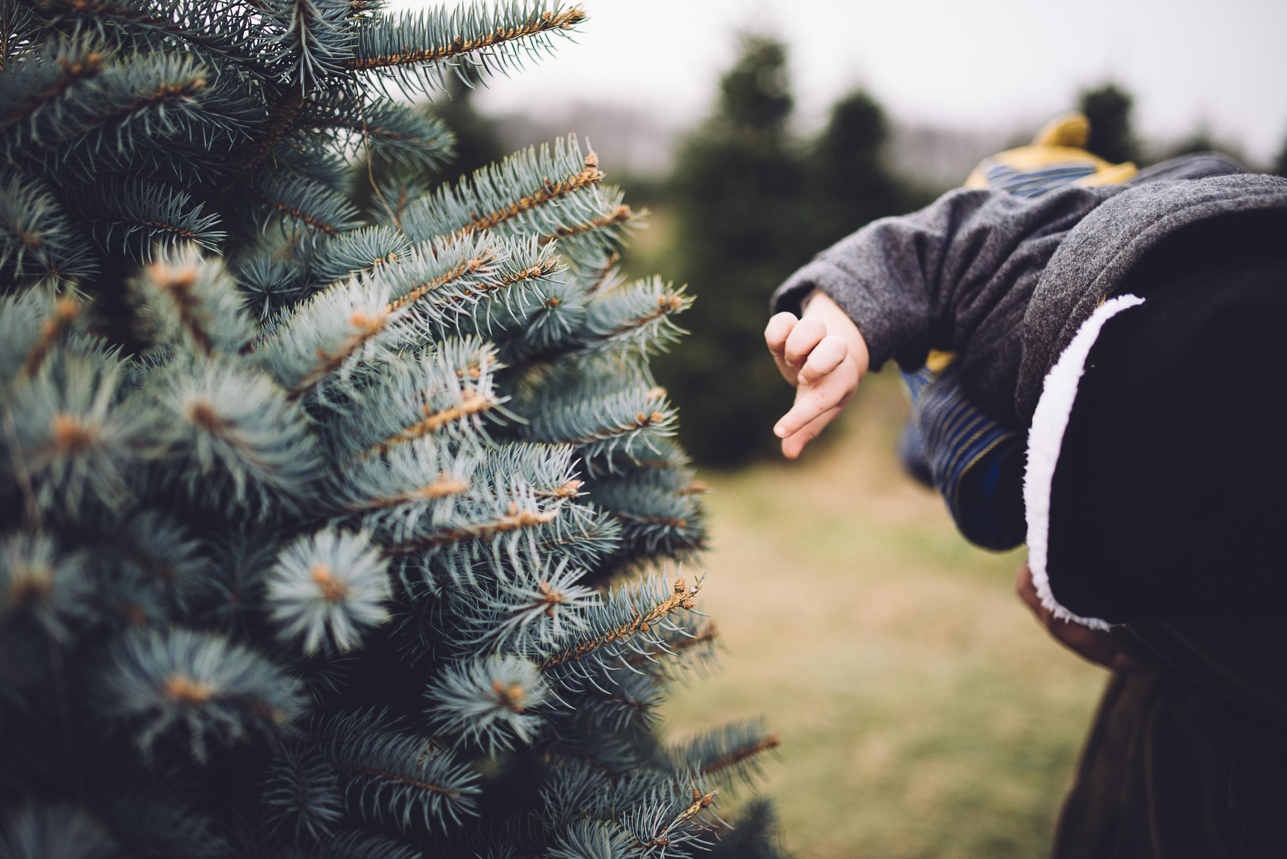 christmas-tree-cutting-7.jpg