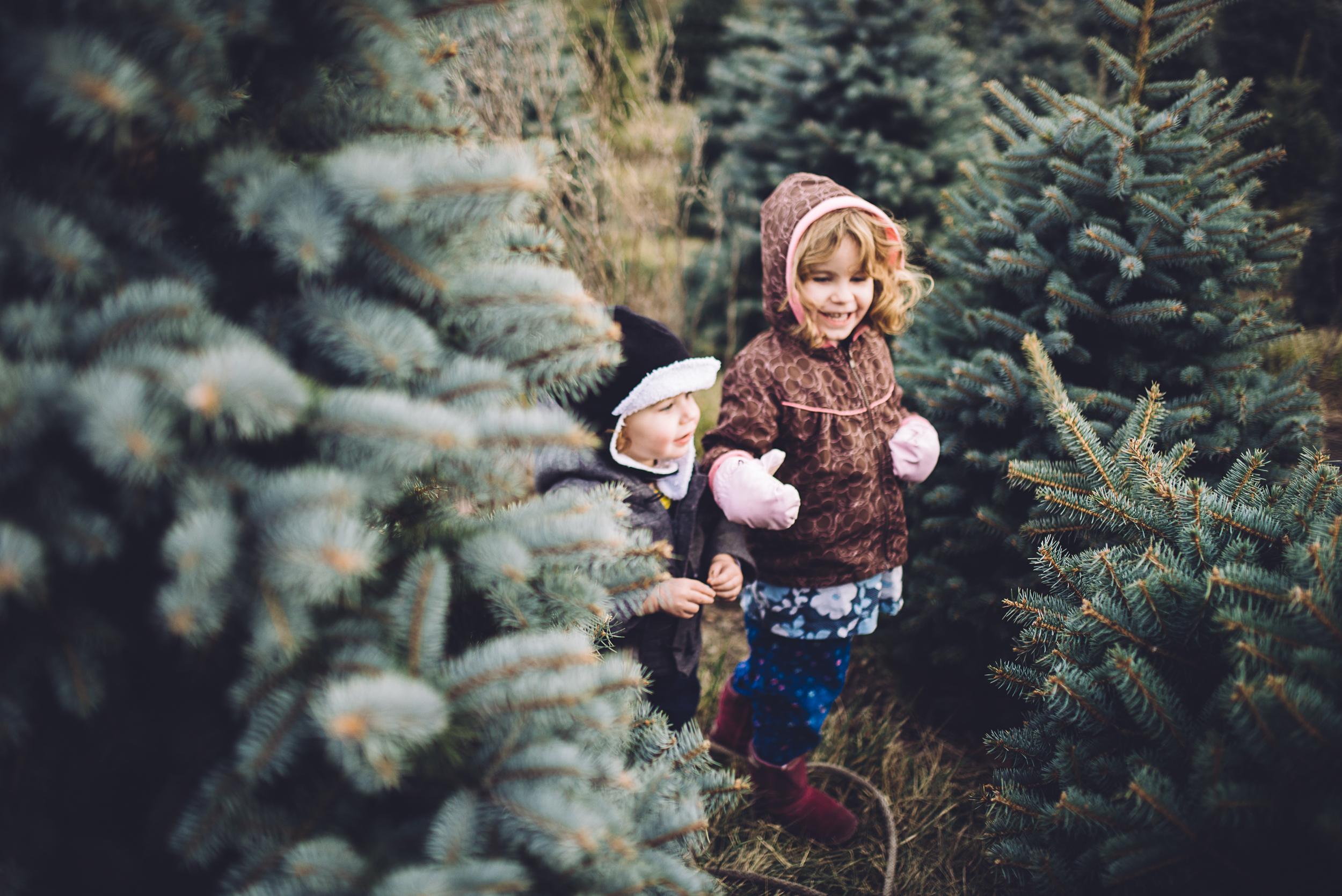christmas-tree-cutting-9.jpg