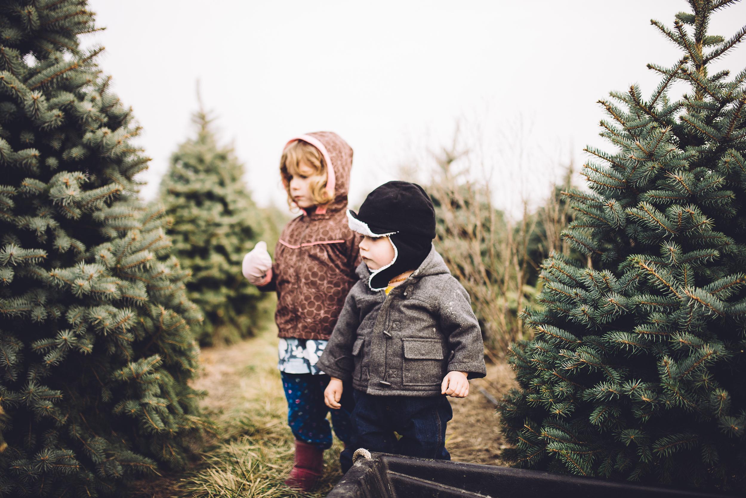 christmas-tree-cutting-8.jpg