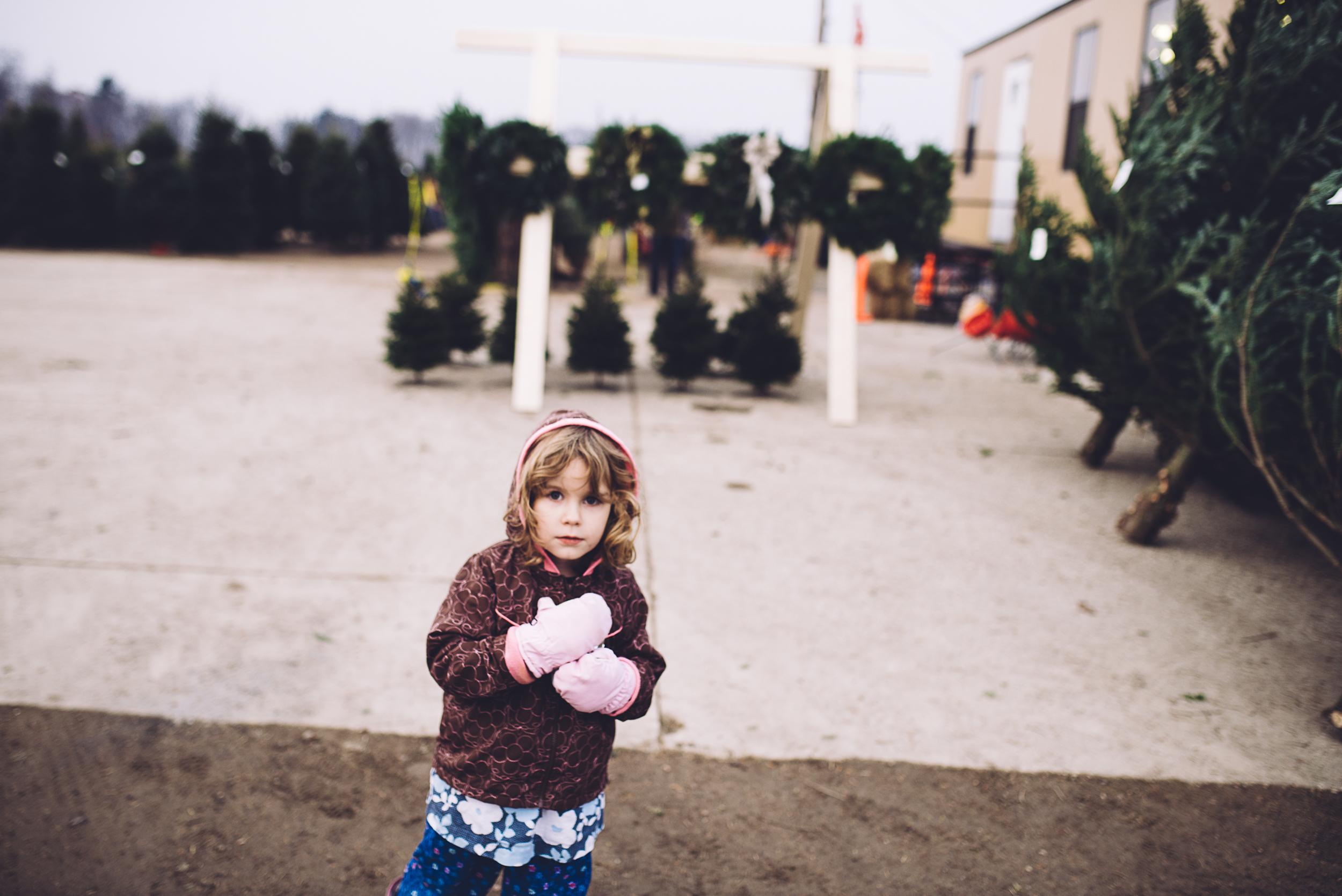 christmas-tree-cutting-13.jpg