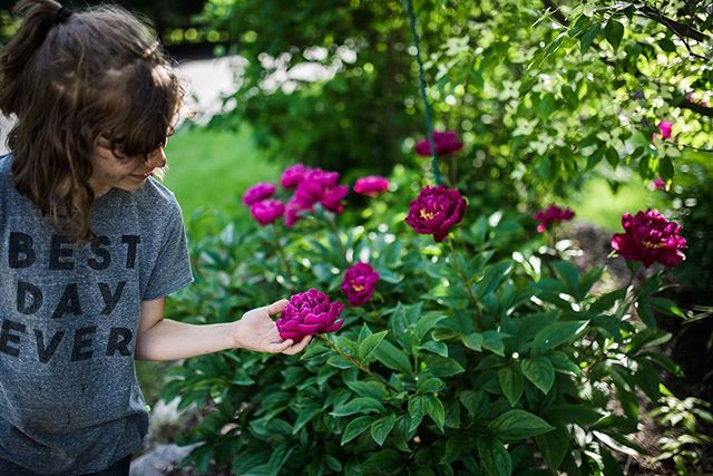 The day our first baby was born the peonies in our backyard bloomed, just as I had prayed they would. Every year since then we have made photographs of her with peonies. You can imagine how special it is to see the progression year to year. This year — her 8th birthday — she felt it best to have mud on her face. 🤷🏼‍♀️ #brookecollierphotography #grandrapidsphotographer #storytellingphotography #visualstorytelling #annualtradition #peonies