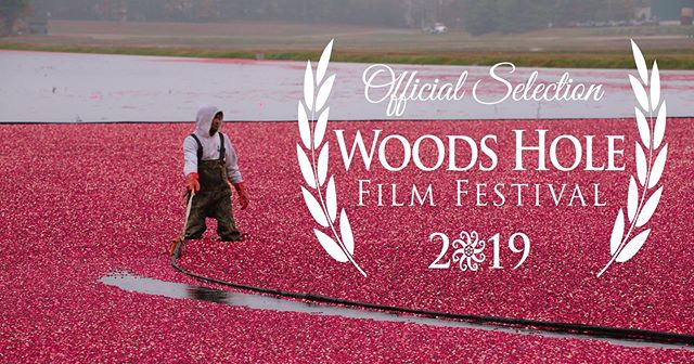 This Wednesday we are screening The Pollinators @pollinatorsfilm at the Woods Hole Film Festival @woodsholefilmfestival 31 July 2019 5:00 PM Lillie Auditorium, 7 MBL StreetWoods Hole, #woohoo #bees  #honeybees #beekeeping  #beekeepers #pollinators  #environment  #food  #farming #pollination #agriculture #beehives #honey #film #filmmaking #documentary #documentaryfilm #filmfestival