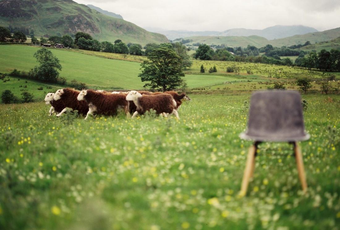 Solidwool - Herdwick wool (Photo credit Jim Marsden) 2.jpg