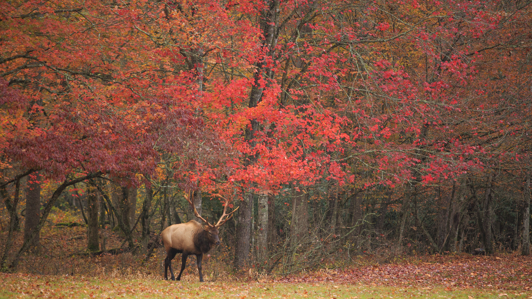 As I said, I think the color is better in Cataloochee Valley.