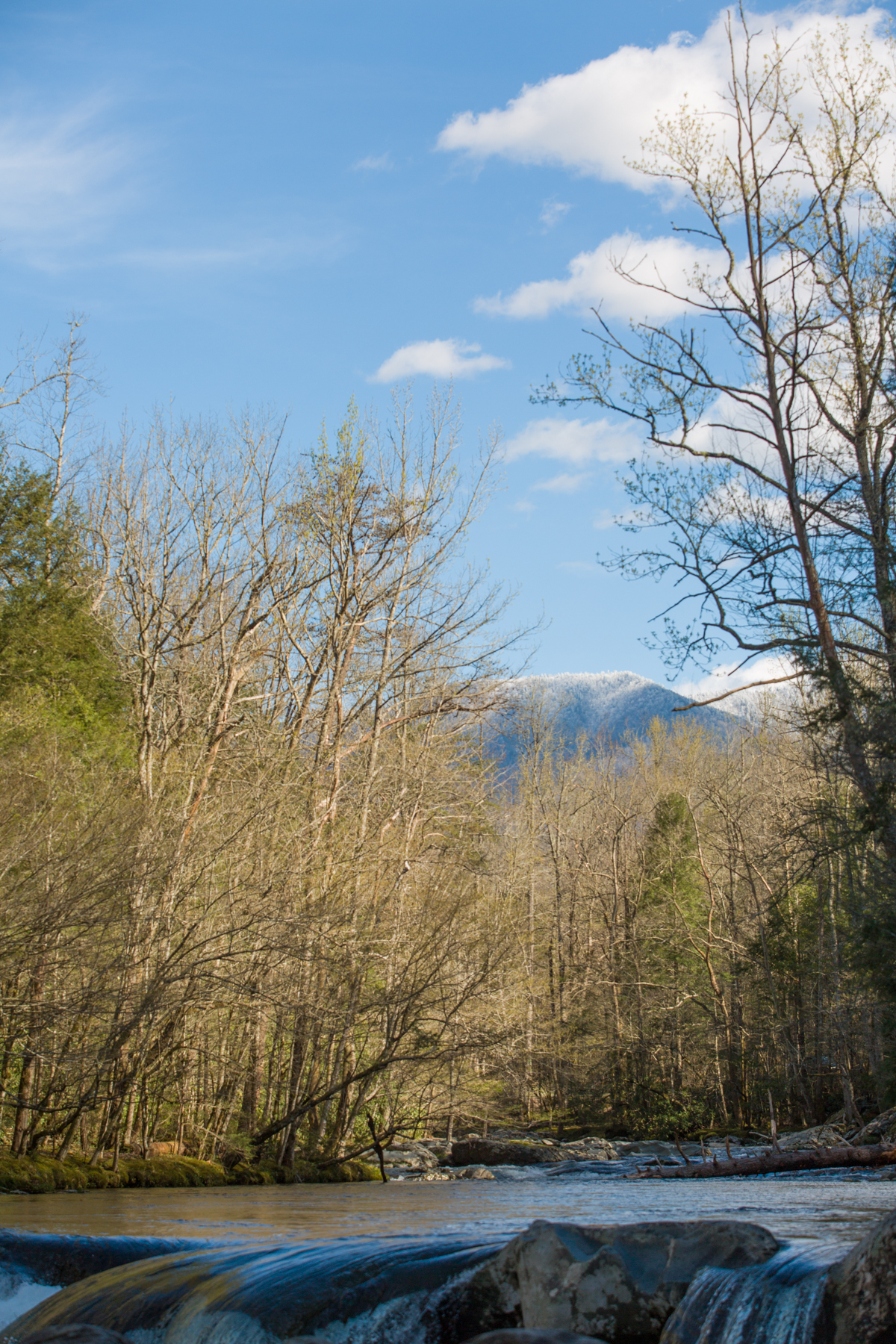 The Little Pigeon River in the Greenbrier section of the Great Smoky Mountains