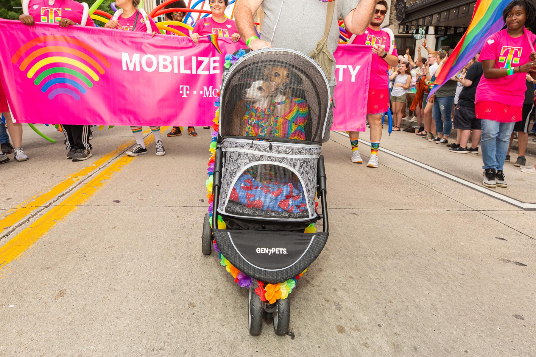 Knox Pride 2019-61.JPG