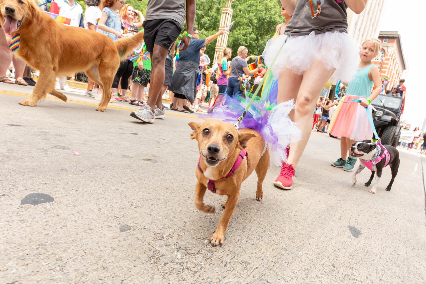 Knox Pride 2019-101.JPG