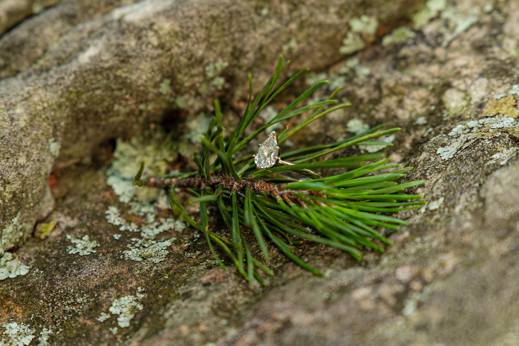 Engagement Ring in Woodland Setting.jpg