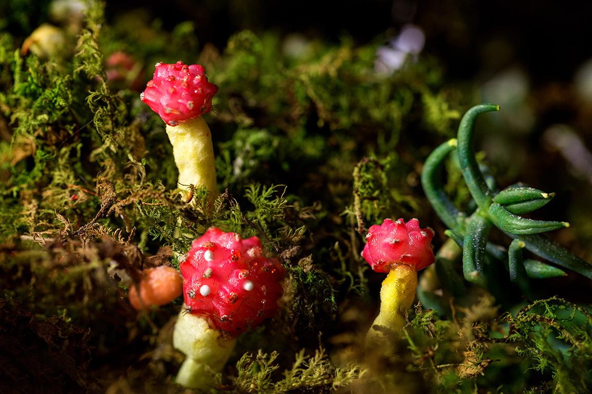 mushroom40x60.jpg