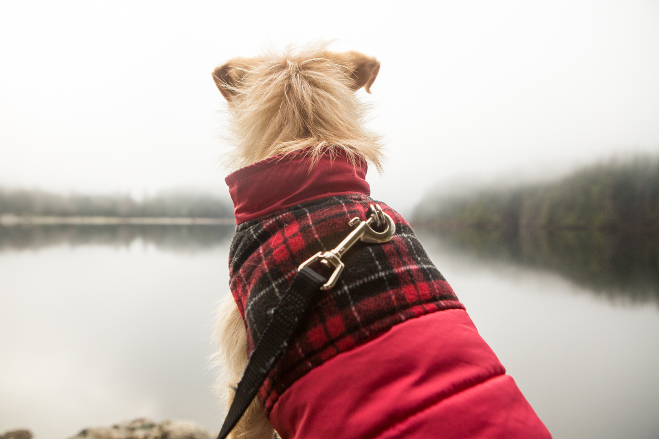 Bolandia_Blog_Vancouver_Bunzten-Lake-2251.jpg