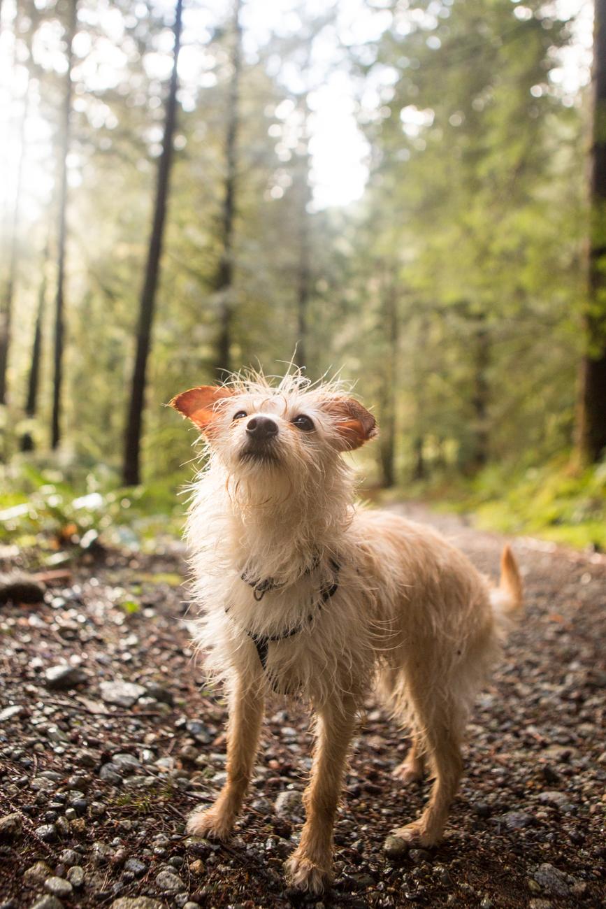 Bolandia-Blogger-Vancouver-Alder-Flats-Hike-Golden-Ears-Park-00387.jpg