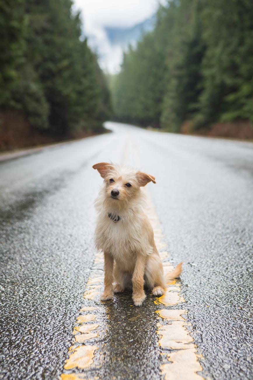 Bolandia-Blogger-Vancouver-Alder-Flats-Hike-Golden-Ears-Park-7946.jpg