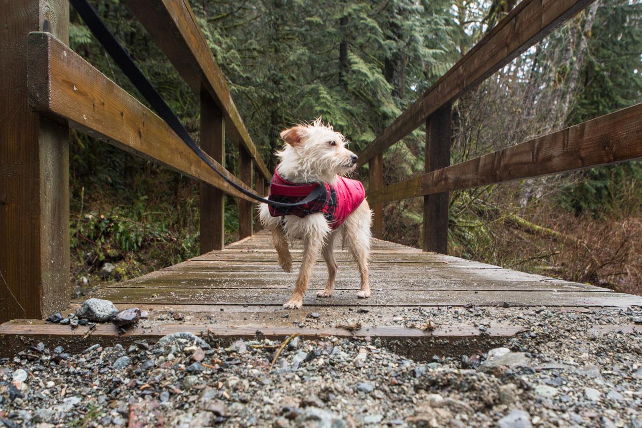 Bolandia-Blogger-Vancouver-Alder-Flats-Hike-Golden-Ears-Park-8096.jpg