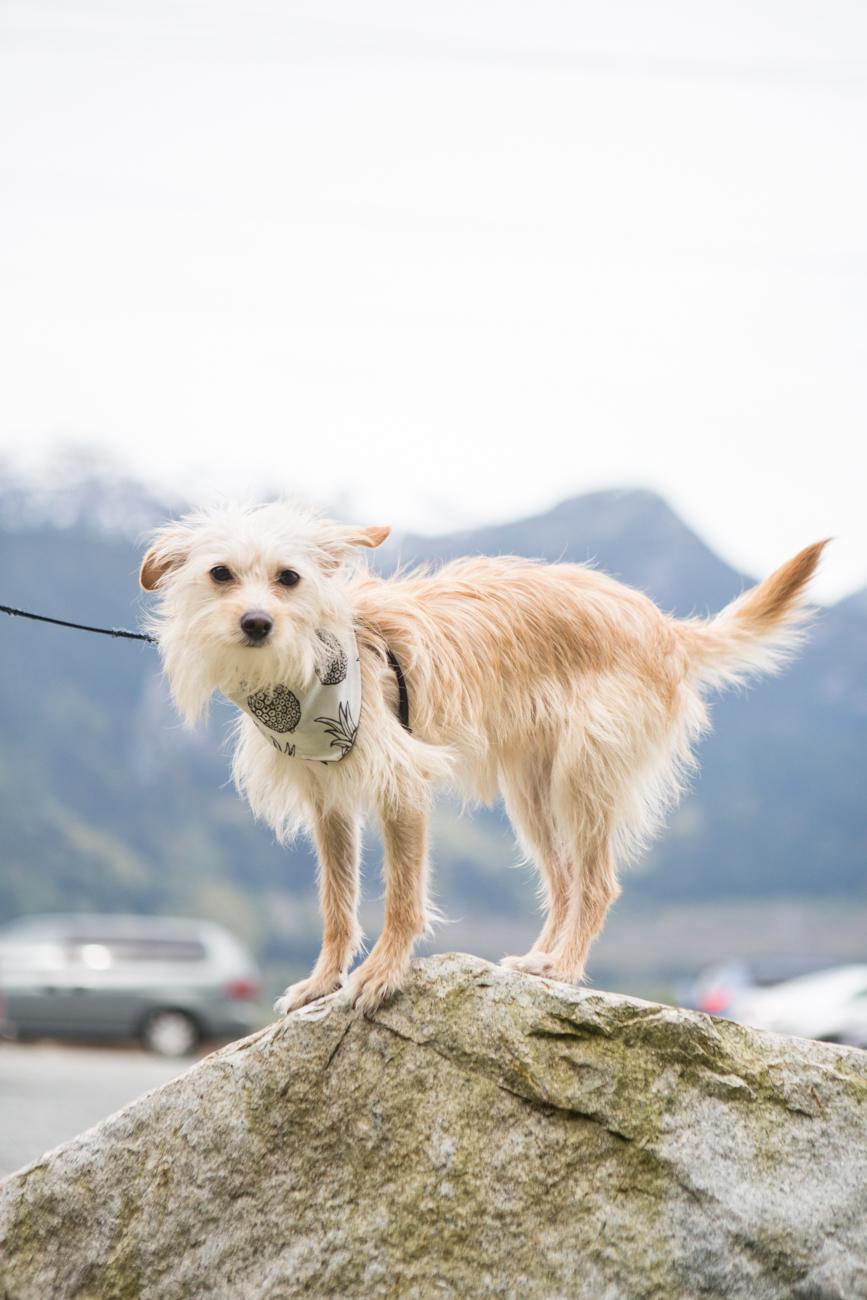 Bolandia_Blog_Vancouver_Squamish_-Chief-Hike-9892.jpg