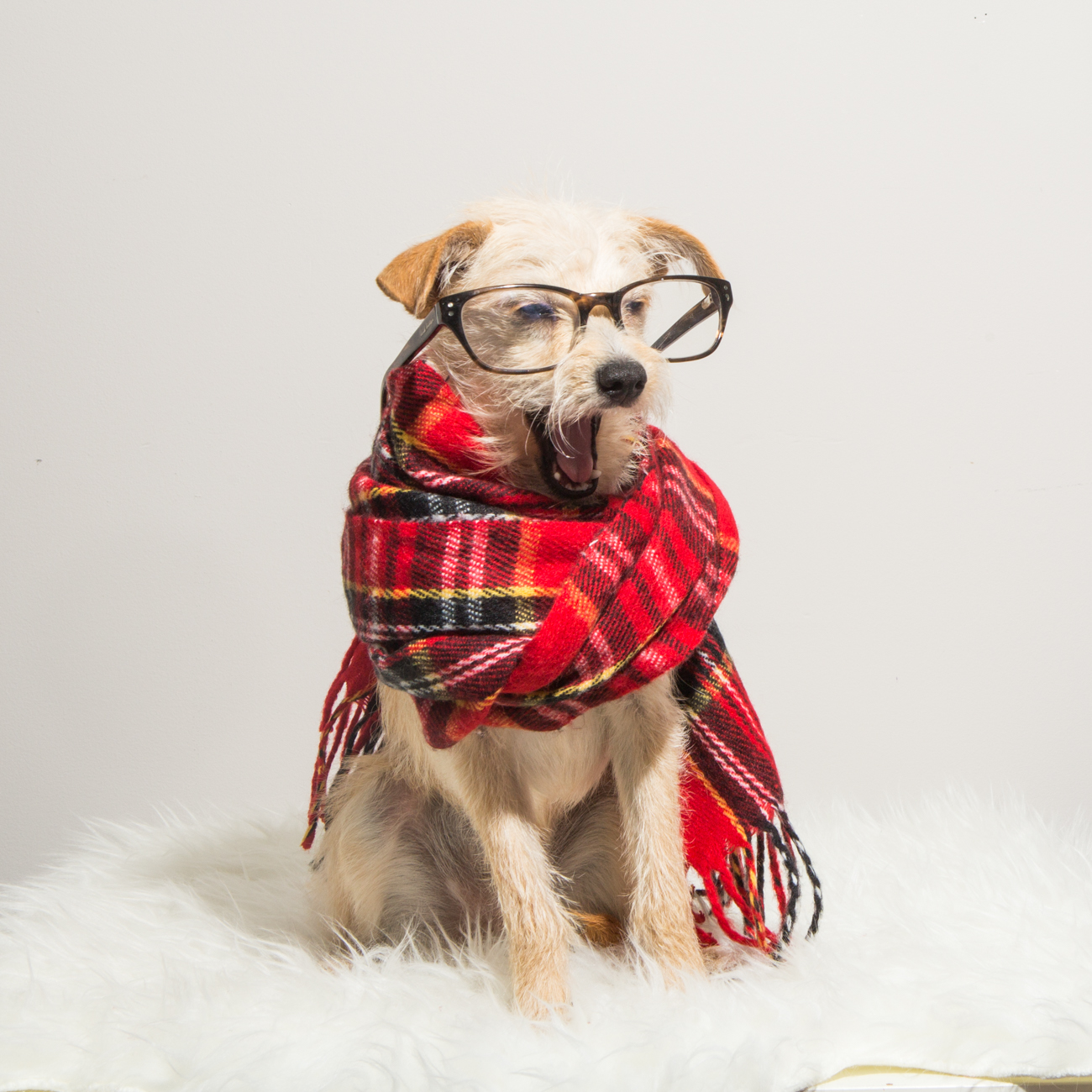 Bolandia Blogger Vancouver - Dog Christmas Costumes-9522