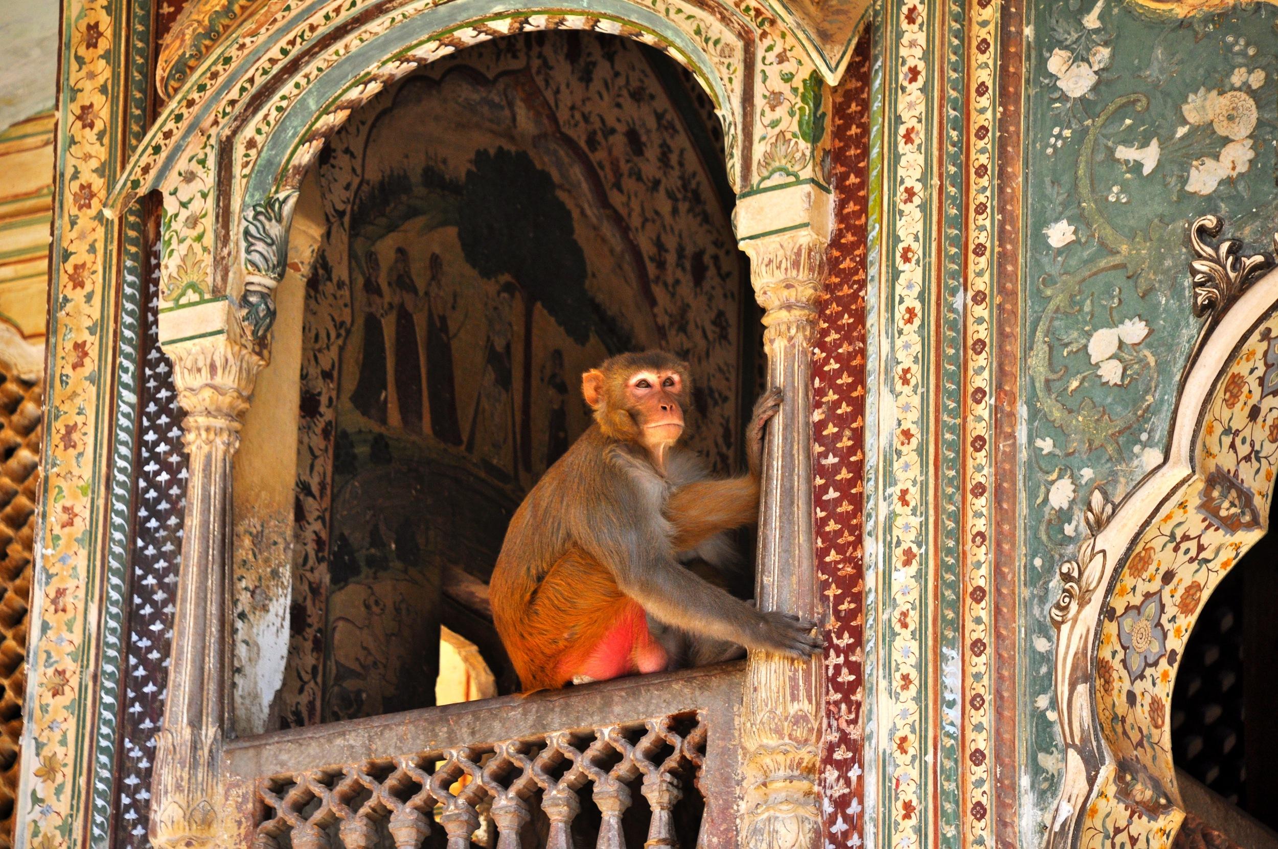 India+-+Ancient+Monkey+Temple.jpg