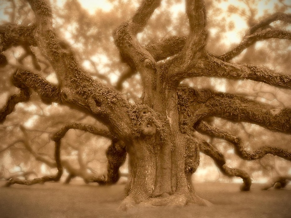 934_Angel_Oak.jpg