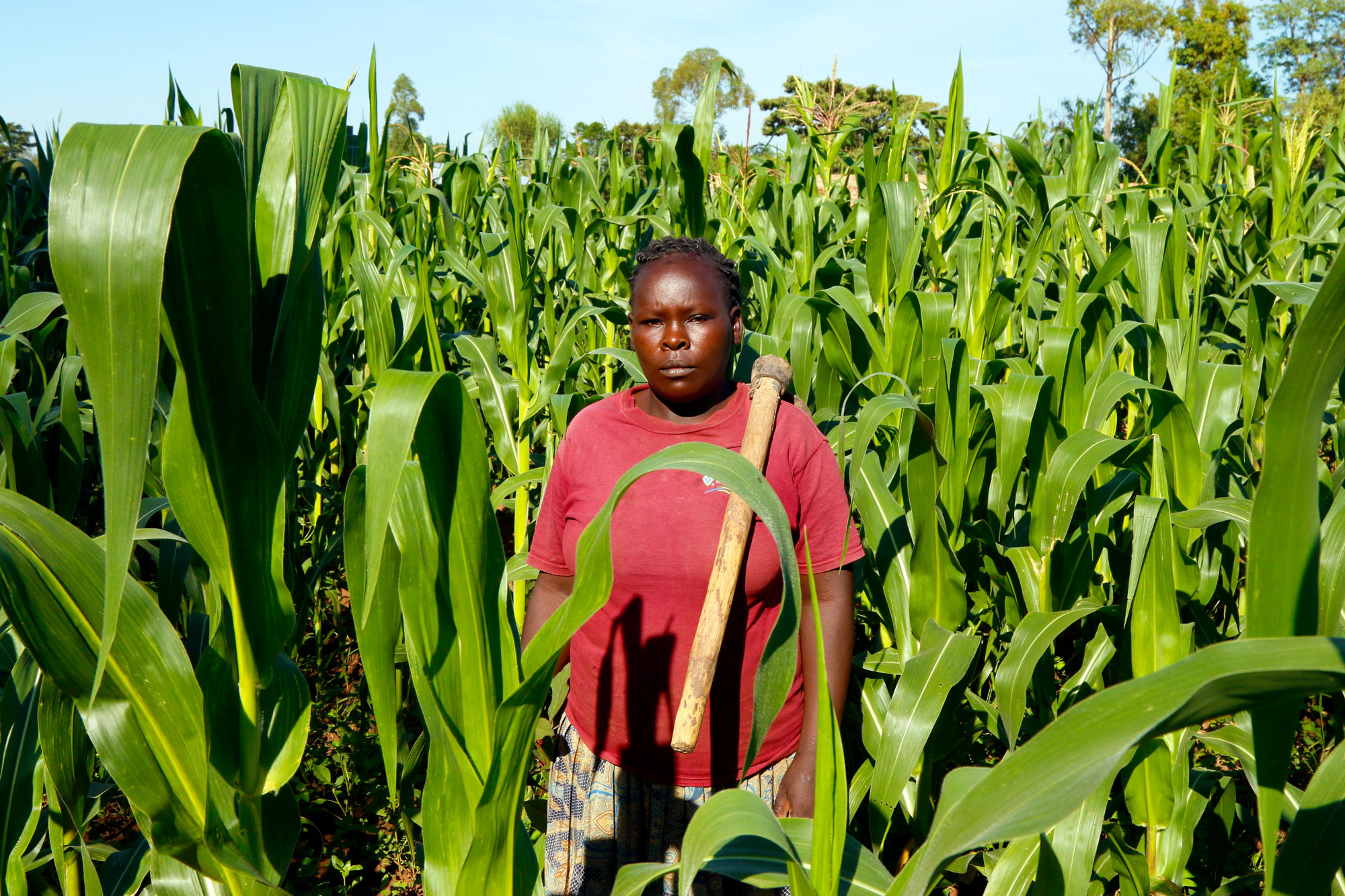 Farmers like Josephine Wamela are reeling from climate change, but struggle to get the money needed to buy adaptive tools.  (Tim McDonnell)