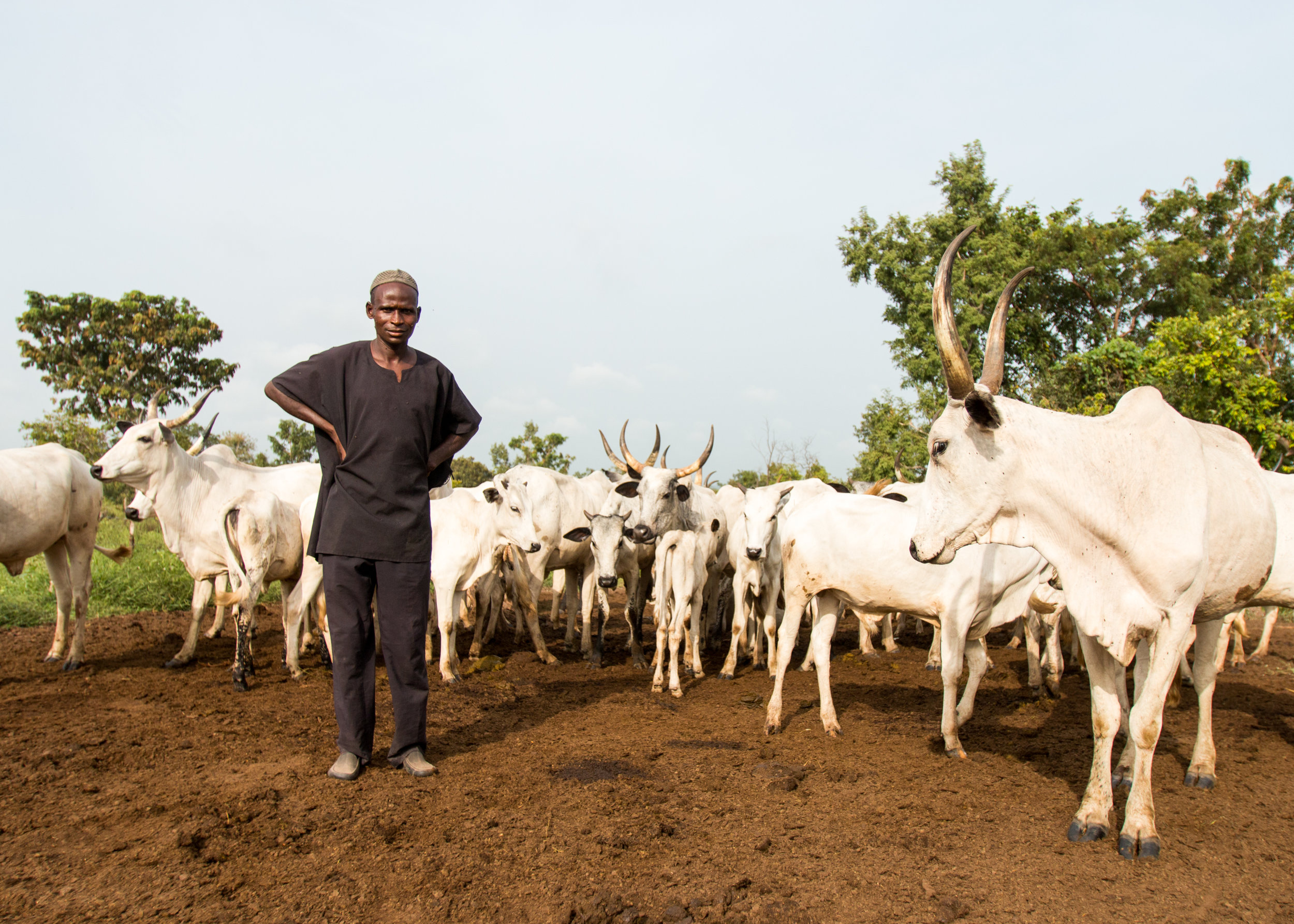 Saminu Mohammad is a Fulani cattle herder who decided to defy Benue State's ban on cattle grazing. (Tim McDonnell)