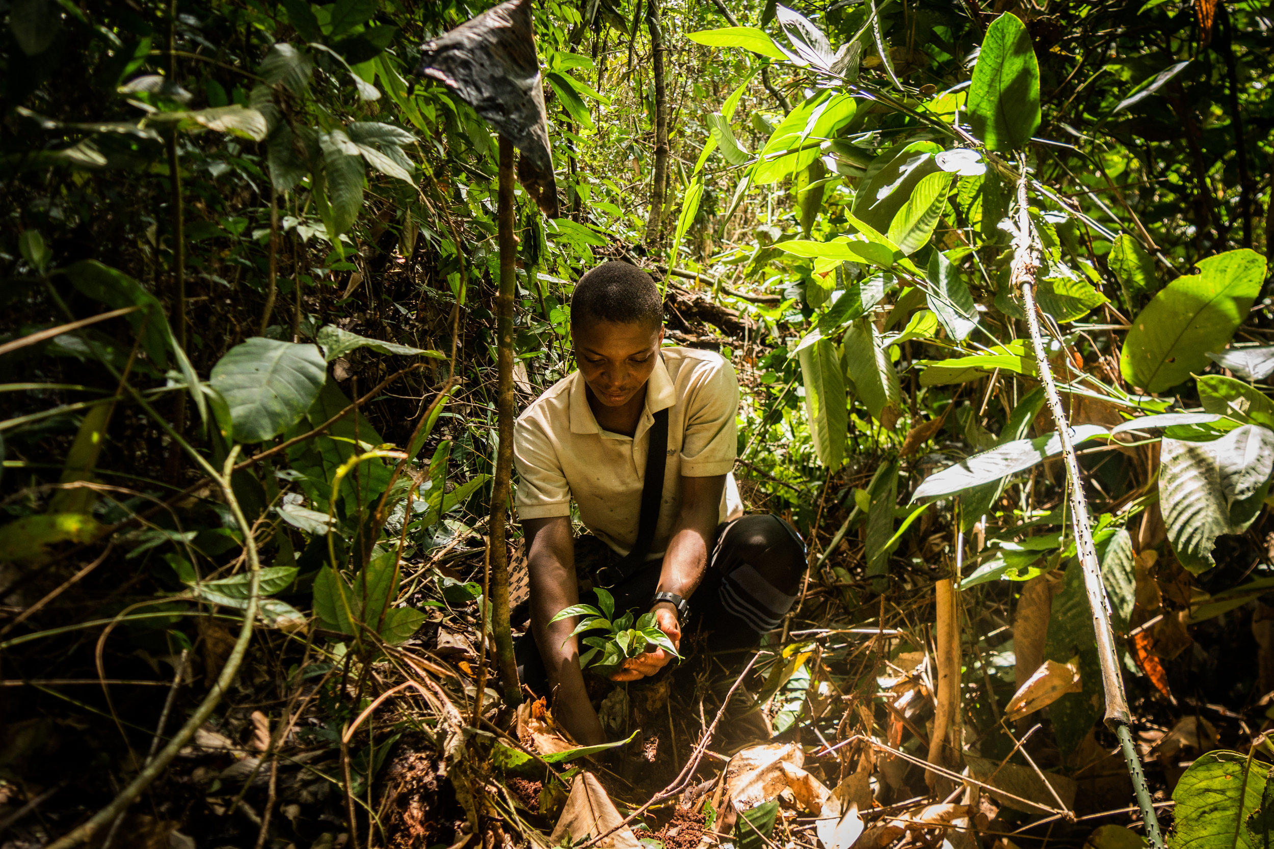 """Noël Nakere Dobo Nkouli finishes planting an ebony sapling in the Congo Basin forest of southeastern Cameroon. """"These trees,"""" he says, """"are our heritage."""" PHOTOGRAPH BY TIM MCDONNELL"""