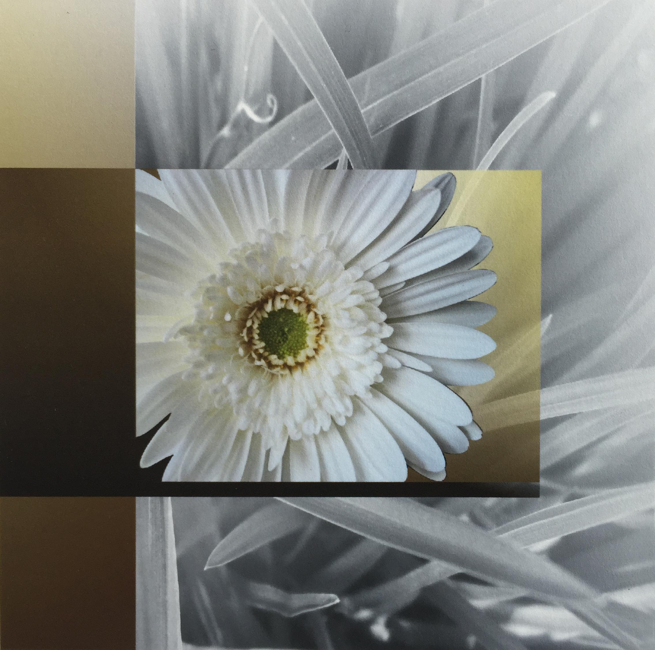 20160330-gerbera-daisy-collection-1-jpg.jpg