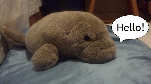 My manatee friend also says hello