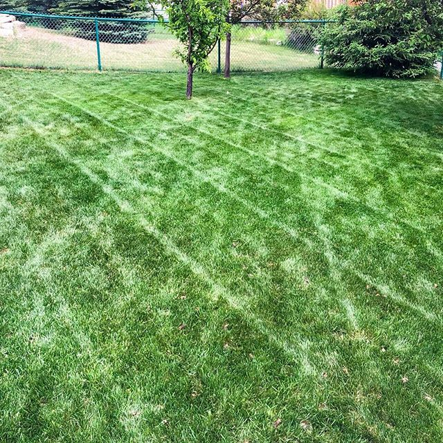 When you finally have time for your own yard 😂 . . . #landscaping #calgary #cochrane #yyc #yyclandscaping #calgarylandscaping #lawncare #familybusiness #shopyyc #smallbusinessyyc #lux #yycliving #yyclandscaping #maintenance #lawnmowing #trimming #sod #mulch #construction #fertilizer #customerservice #customersfirst #family #springcleanup #aerate #powerrake #dethatch