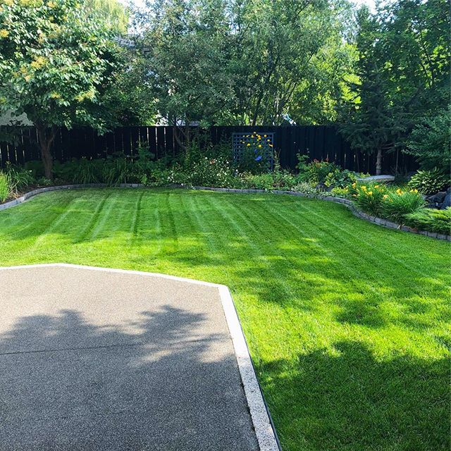 Lush to the max. . . . #landscaping #calgary #cochrane #yyc #yyclandscaping #calgarylandscaping #lawncare #familybusiness #shopyyc #smallbusinessyyc #lux #yycliving #yyclandscaping #maintenance #lawnmowing #trimming #sod #mulch #construction #fertilizer #customerservice #customersfirst #family #springcleanup #aerate #powerrake #dethatch