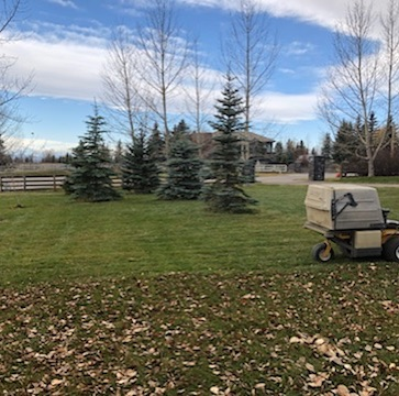Another day, another clean-up! . . . #landscaping #calgary #cochrane #yyc #yyclandscaping #calgarylandscaping #lawncare #familybusiness #shopyyc #smallbusinessyyc #lux #yycliving #yyclandscaping #maintenance #lawnmowing #trimming #sod #mulch #construction #fertilizer #customerservice #customersfirst #family #fallcleanup #snowremoval #plowing