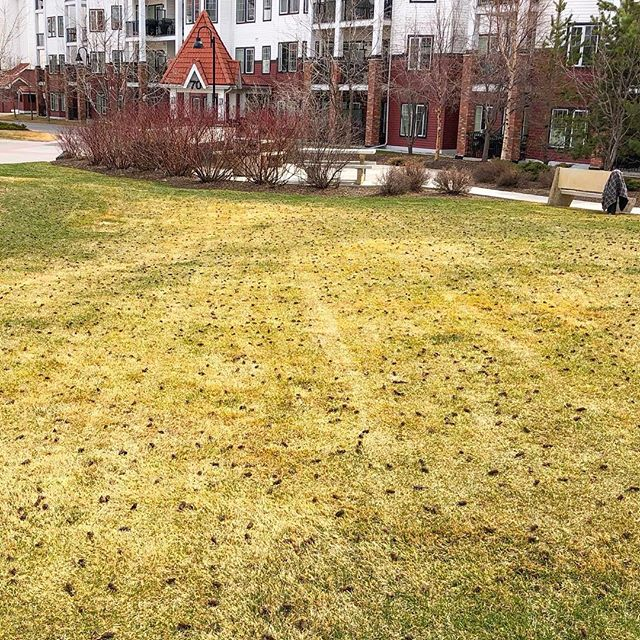 Spring has us just PLUGGING along 😹 . . . #landscaping #calgary #cochrane #yyc #yyclandscaping #calgarylandscaping #lawncare #familybusiness #shopyyc #smallbusinessyyc #lux #yycliving #yyclandscaping #maintenance #lawnmowing #trimming #sod #mulch #construction #fertilizer #customerservice #customersfirst #family #springcleanup #aeration