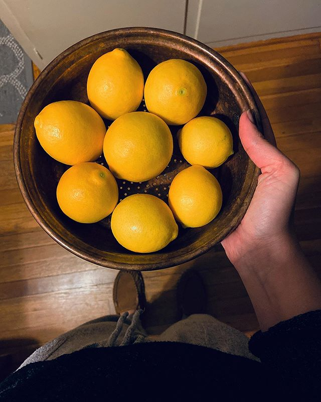 Here's a dimly lit photo because I'm so excited - I grew meyer lemons! 🍋 After more than a year of patience and tender care of a very fickle tree, I got to harvest this bowlful of meyer lemons. Unsure what they'll become, but I suspect at least one will end up in a maple bourbon sour.  #rlcgarden #growyourownfood #growiteatit #organicgardening