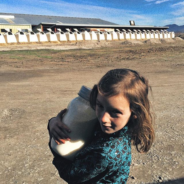 Trip to the dairy to pick up some fresh colostrum for little baby calf girlie- she drank all the reserves we had! Maisie is holding it tight and we buckled them both in, it's like liquid gold ✨ Cool to see the dairy just down the road and how it all works and now back home to feed this baby calf. #ranchadventures #ranchlife #littlebabycalf